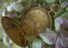 Macro Monday - Time (yafit770) Tags: flower macro green clock leaves gold petals time antique watch challengeyouwinner macromondays cyunanimous