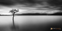 Milarrochy Bay, Loch Lomond (StuG123) Tags: milarrochybay lochlomond landscape mono tree settingsun luss bigstopper leefilters explore