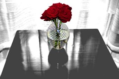 Five Roses Day (Mambo'Dan) Tags: colorsplash roses impressionart red redroses photopainting digitalart