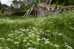 IMG_0923-297 (Martin1104) Tags: fotografie natuur bergen landschap vlinders yagodina snp bulgarije natuurfotografie natuurreis