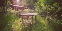 Ant Cabin (PonyHans / Castor) Tags: old summer house green abandoned grass animals forest landscape skne chair woods dof nest sweden ant insects ants sverige nesting antnest myror