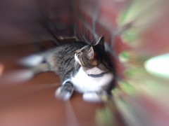 Felix (~~Dirk~~) Tags: lensbaby iphone lm10 5se