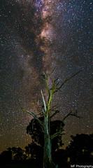 Manildra night (Mick Fletoridis) Tags: australia