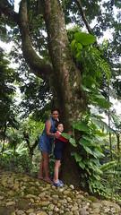 Abrazar un rbol cura el alma (Mayan_princess) Tags: chiapas argovia finca resort caf coffee kaffee paraso paradise vegetacin vegetation verde green ro river spa relajacin relax forest selva orgnico autosostenible