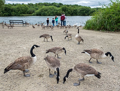 Feeding Time (davep90) Tags: davep90 fuji xe2 1855 pennington flash