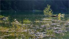 Reflections @ Lake Gosau (lady_sunshine_photos) Tags: reflections spiegelungen gosausee lakegosau salzkammergut upperaustria obersterreich austria at sterreich europe europa sommer abendlicht eveninglight leica leicavluxtyp114 ladysunshine ladysunshinephotos seegras seagrass leuchten see sea wonderfulworld
