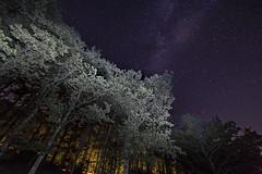 Starry night (Willycaster) Tags: nightsky nightscape via lattea notturno cielo stellato stelle italia italy viterbo lago di vico panorama notte