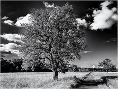 Watching the Way... (Ody on the mount) Tags: anlsse bume fototour pflanzen rahmen seitenlicht wege wolken bw monochrome sw