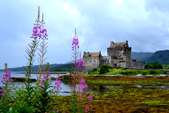 Eilean Donan Castle (florencia mele fabris) Tags: travel sky aire reflejo water reflection nikon eilean donan castle scotland uk 2016 castillo escocia arquitectura architecture nature flower