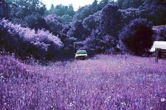 01-019 (tylerquinn82) Tags: field pontiacvibe lomochrome purple lomochromepurple lomography pentwatermichigan car beauty surrealism summer film shotonfilm 35mmfilm canoneoselan filmphotography pentwater michigan