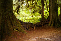 The Trees Are Kissing (Anomieus) Tags: olympic green white creek trees river serene stream forest woods nature natural water landscape outdoor waterfall washington washingtonstate olympicpeninsula moss fort trail rain nationalpark temperate september 2016 hohrainforest hoh hallofmosses wald foresta bosque  skgur bos pyll   me baso    uma  bosc lasang  les skov arbaro mets neverstopexploring olympicnationalpark