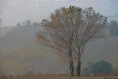 Marotti Campi