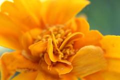 Copetito (Mari Tutu) Tags: flor flores naturaleza polen abejas primavera calor cactus florecer blanco y negro kokedama tapas canon bolas de papel flore plantas rosa malvon brote vida