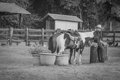 Cavalos (empsistemas) Tags: cavalo horse fazenda farm natureza nature flor flower grama cerca grid