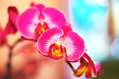 Orchid II (Mélanie Sarro) Tags: orchid flower fleur colors orchidée niceflower beautifulflower joliefleur