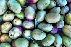 Olives Harvest (David Parody) Tags: david m parody 2014
