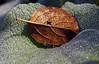 Eingebettet (Renate Dodell) Tags: autumn dewdrops leaf herbst tau dachau blatt stucture tautropfen schlossgarten 2014 stuktur dorenawm nex7 renatedodell