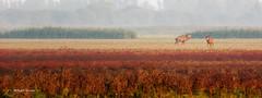 Foto safari OVP_083_2014-Wilvis ME.jpg (Wiljanvisser) Tags: 2014 oostvaarderplassen