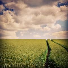 #landscape #nature #fields #meadows #outdoors #wildflowers (Steven Krohn) Tags: nature landscape outdoors meadows fields wildflowers