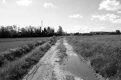 Welcome home. (Ondeia) Tags: italy milan alberi italia milano natura campagna milanese prati settimo coltivazioni