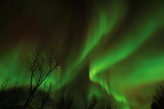Aurora7 (vic_206) Tags: light luz norway noruega northernlights borealis tromso auroraboreal canoneos60d tokina1116