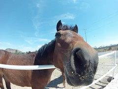 Selfie (manuelgarduno88) Tags: horse animal caballo nose friend animales establo
