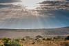 Masai Mara (João.Martins) Tags: africa sun canon kenya safari masaimara raiosdesol 500d canon500d quenia quénia