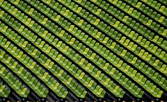 Green Stadium Seating (only lines) Tags: green germany munich empty rows seats seating olympicstadium