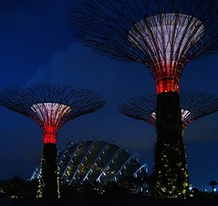 Super Trees  and dome (SM Tham) Tags: singapore greenhouse nightscene glasshouse gardensbythebay gardenstosee supertrees