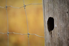 Hole in Fence Post (Vegan Butterfly) Tags: wood fence wooden wire hole post