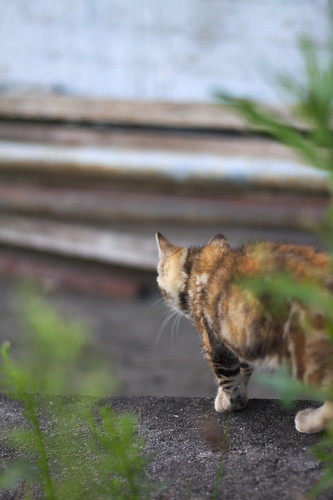 Kitten   Kätzchen