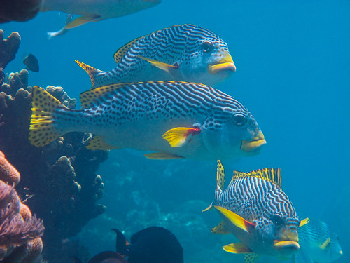 fishes by TravelingShapy, on Flickr