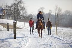 IMG_2239 - Arbeitskopie 2 (Role Bigler) Tags: schnee winter horses snow ski pferde skijoring