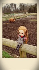 On the farm.