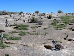 Puerto Madryn-79