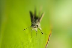 ~~ The Moth ~~ (Excel exposures) Tags: club photography micro m42 pentacon praktica ppc 2450mm macroandcloseup pondiherry