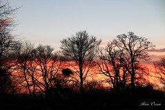 2014_12_13_ (1) (Photo Passion 50) Tags: photo ciel alain marais paysages photographe photopassion orvain photopassion50