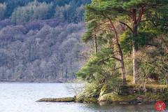On the way to Skye 5 (Kasia Sokulska (KasiaBasic)) Tags: trees lake mountains landscape island scotland spring highlands loch lomond inveruglas fujix