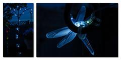 Dragonfly Solar Lights (Anvilcloud) Tags: longexposure backyard diptych solarlights
