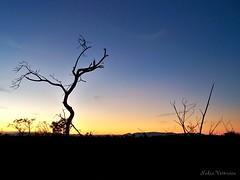 Ocaso no Vale do Jequitinhonha/ Sunset in Jequitinhonha Valley (nadia.veronica) Tags: brazil minasgerais southamerica gerais cerrado valedojequitinhonha bgtmg jequitinhonhavalley turmalinamg