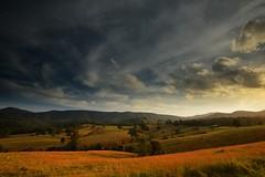 Sweet Green Fields (Paul Hollins) Tags: australia newsouthwales aus waukivory nikon1635mmf4 nikond750