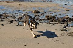 25april_gardskagaviti_013 (Stefn H. Kristinsson) Tags: dog playing beach spring sand venus april hundur clearsky strnd 2016 tamron2875 garskagaviti nikond800