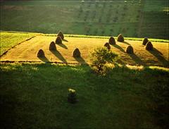 Last rays (Katarina 2353) Tags: summer film landscape nikon europe serbia fields srbija zlatibor katarinastefanovic katarina2353