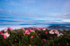 -4 (billlushana1) Tags: travel cloud mountain flower tree sony taiwan hike peaks  taroko tw  tarokonationalpark hehuanshan    mountain 100peaksoftaiwan taiwantop100peaks sonya7r