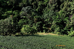 Royal Projects Thailand. (ol'pete) Tags: maetaeng chiangmai thailand farm rural mountains hilltribe projects homestay guesthouse      earthasia
