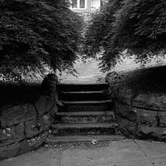 Steps, Oregon City (austin granger) Tags: stone path steps blocked growth staircase disused evidence oregoncity gf670 austingranger