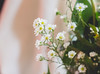 IMG_4185 (Josy'ta) Tags: rose rosas rosascolombianas flowers flores flor diadosnamorados love
