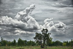 Chasing clouds. (Tungmay (Keep Calm and Take Photos)) Tags: trees sky clouds fields