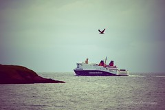 The Way the Seagull Flys (CraigAllanPhotography) Tags: friends sea skye scotland ships minch queenelizabeth seaforth ferrys shipspassing calmaccaledonianmacbrayne