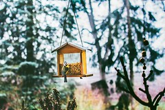 it will come to you in the in-between moments (ivvy million) Tags: bird vogel animal ivvymillion tier vogelhaus birdhouse nikond7100 35mm bokeh winter birdfeeder